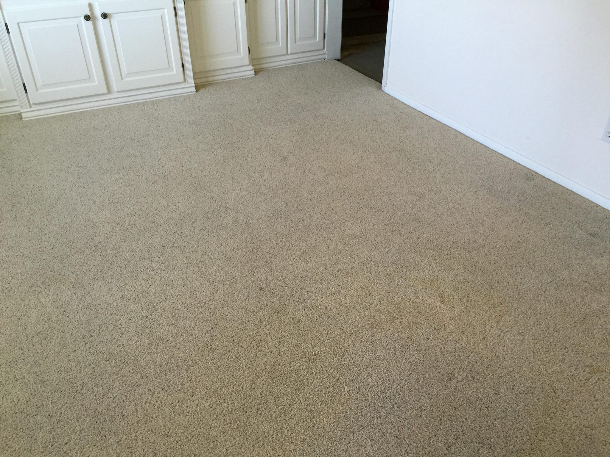 Carpet Cleaning Pet Stains Amp Odor Removal In Ogden Ut